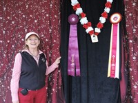 Click to view album: Totally 2013 Sport Horse Nationals